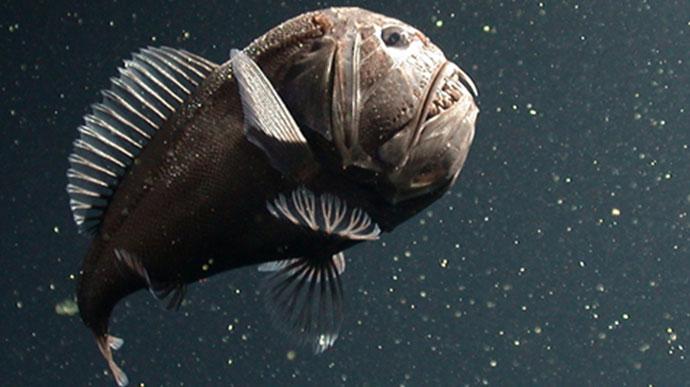 Thumbnail - Monterey Bay Aquarium Research Institute