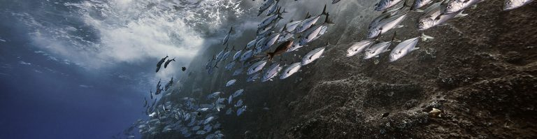 oceans-mexico-masthead