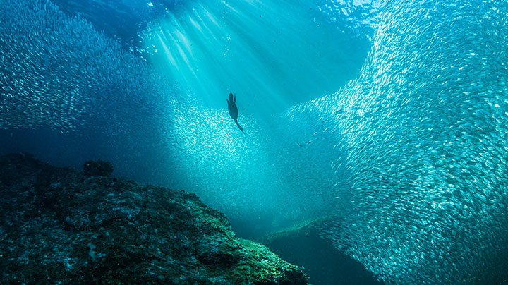 New ocean grantmaking strategy and webpages the david for Ocean images