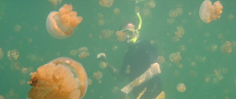 3. snorkeling jelly fish lake, Palau (2)
