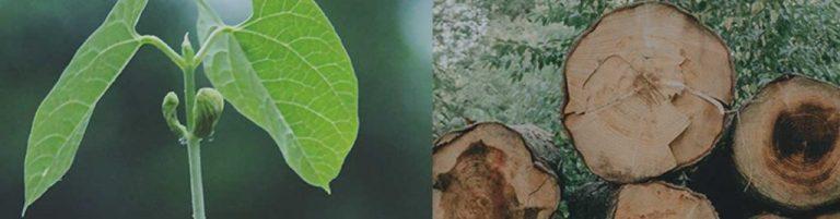 gcas-masthead-plant-wood-1024x268